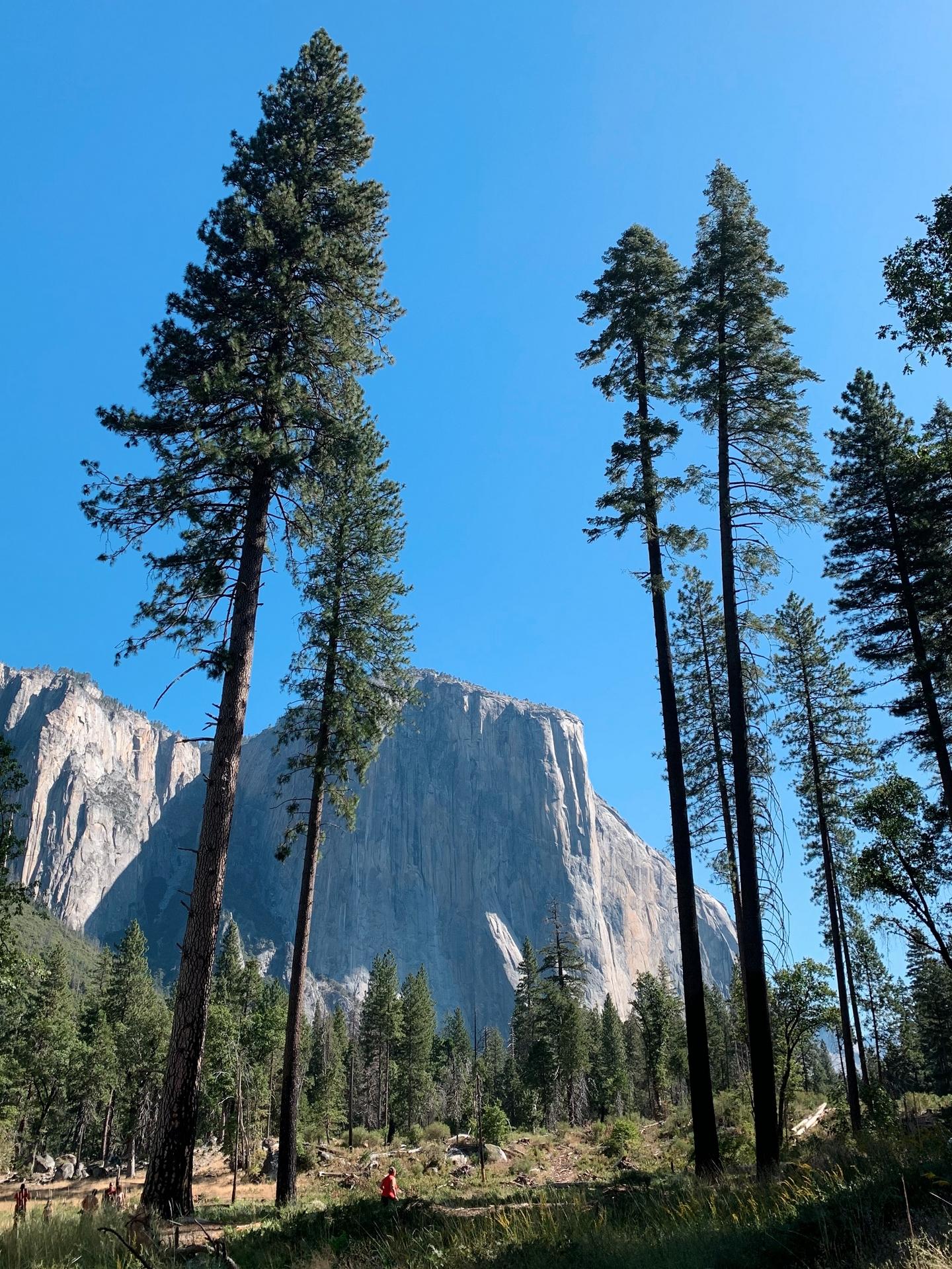 Half Dome Yosemite Valley